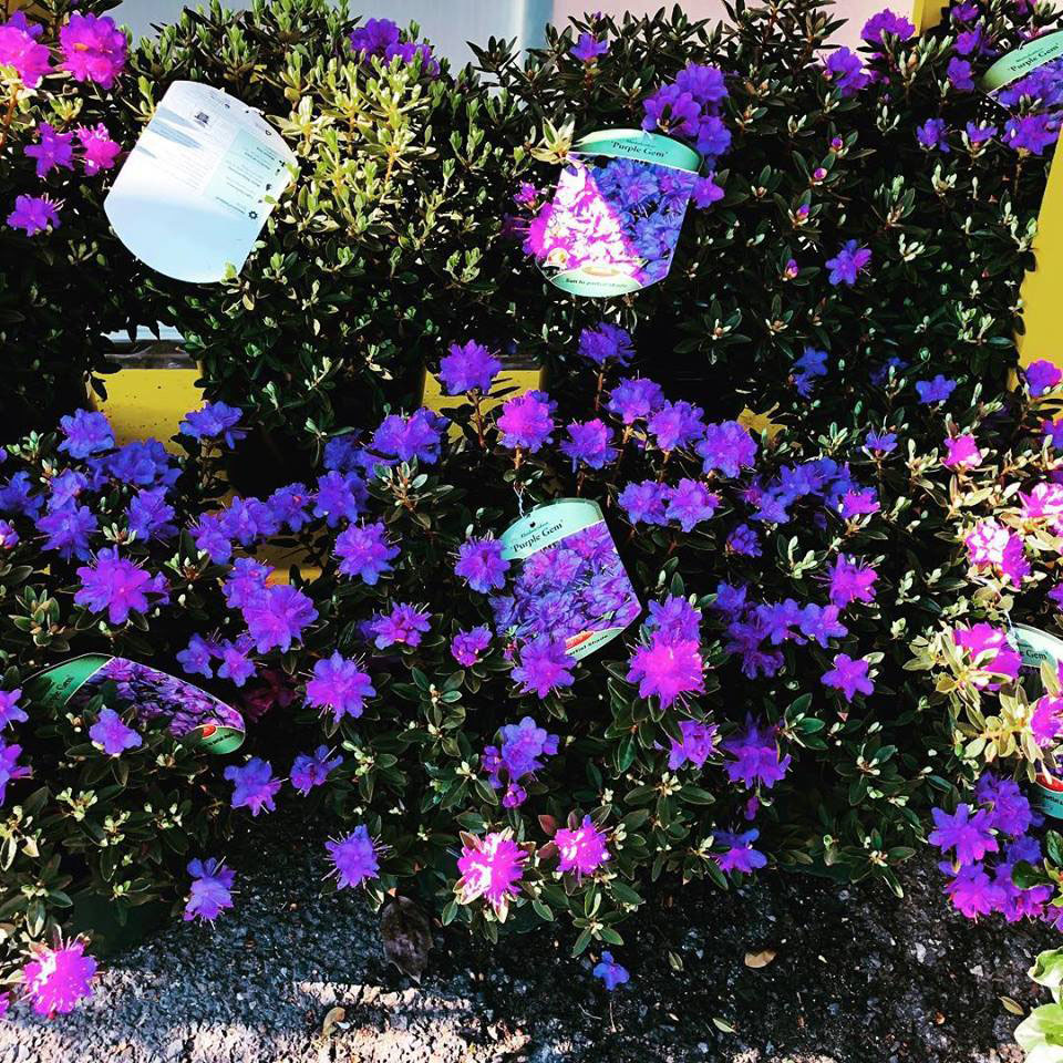Jim Jenkins Lawn Garden Center Focuses On Unusual And Unique Annuals Perennials Our New Deerleerious Brand Of Helps You To Deer Proof Your