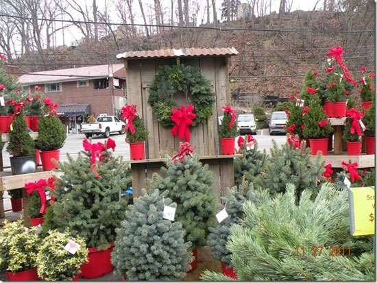 Live Container Christmas Trees Jim Jenkins Lawn Garden Center